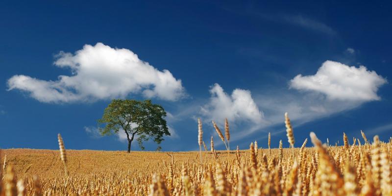 農業をIoT化することで起こる変化